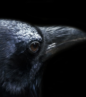 Symbolism of the Crow for CAWcreations – CAWcreations