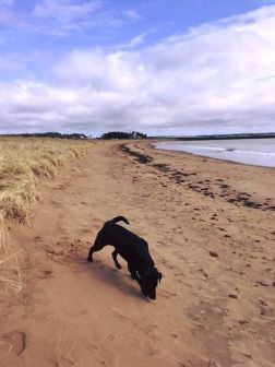 BeachLaunchingHarbour